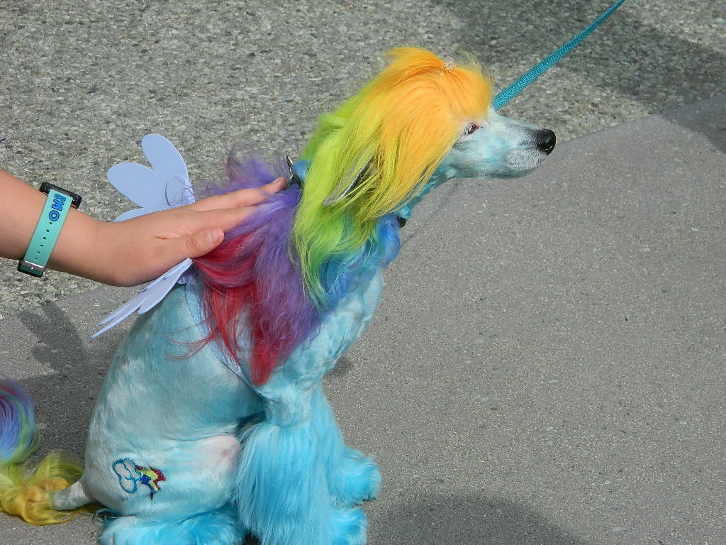 Rainbow Dash Dog